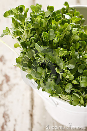 Free Watercress-kaiware Stock Images - 7721604
