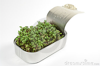 Watercress in a tin can