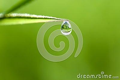 Waterdrop en hierba
