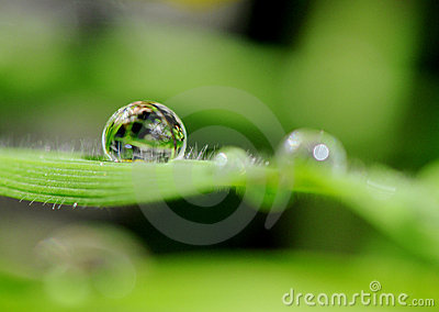 Waterdrop on gras in the sunshine