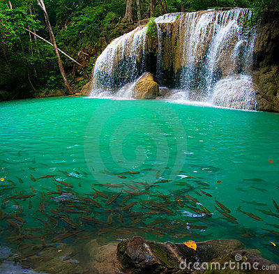 Waterfall and a blue pool with fish