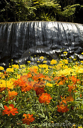 Waterfall at a Botanic Garden