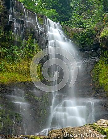 Waterfall through dense forest