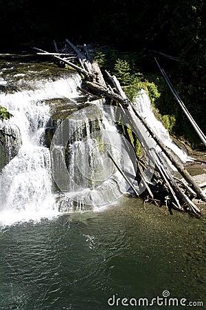 Waterfall fall waterfalls water white forest