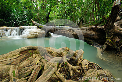 Waterfall with fallen tree