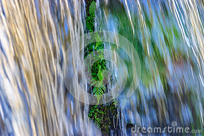 Waterfall with ferns