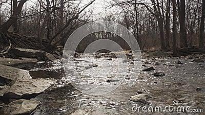 Fall time stream. Waterfall Glen stream during Fall stock video