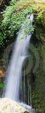 Waterfall and green leaves