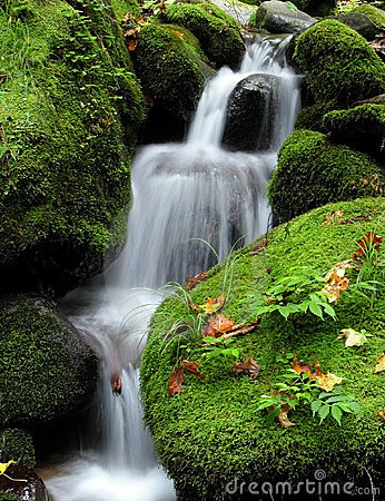 Free Waterfall In The Forest Royalty Free Stock Photos - 1153348