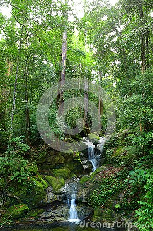 Free Waterfall In Tropical Borneo Rainforests Stock Images - 28851774