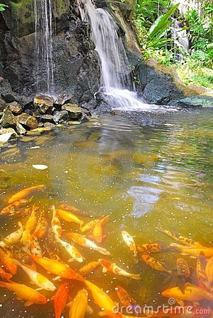 Waterfall with Japanese carp