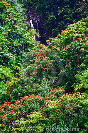 Waterfall in jungle of Hawaii
