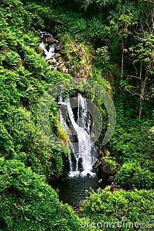 Waterfall in jungle of Hawaii