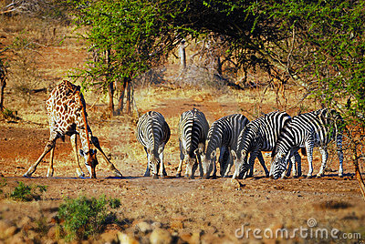 At a waterhole in South Africa