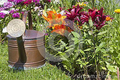 Watering can in front of colorful lilies