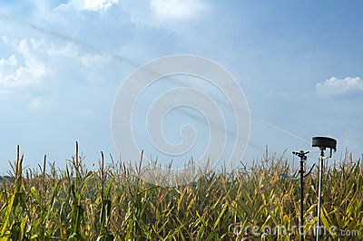 Watering the corn plantation