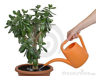 Watering dollar plant cutout