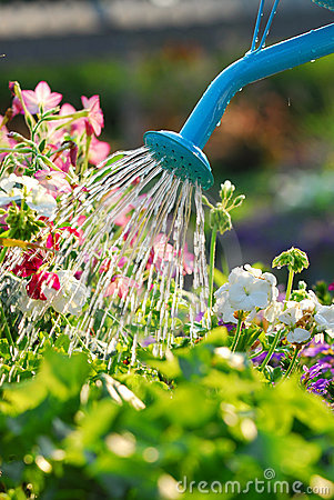 Free Watering Flowers Stock Photo - 2900910