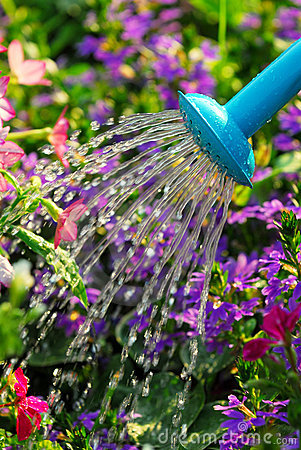 Free Watering Flowers Stock Images - 2963904