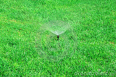 Watering grass