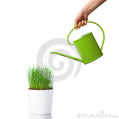 Watering green grass with a watering can