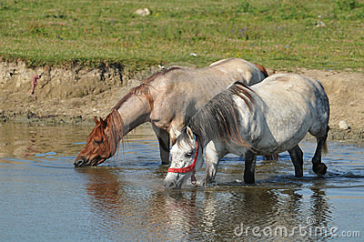 Watering hole on the stud