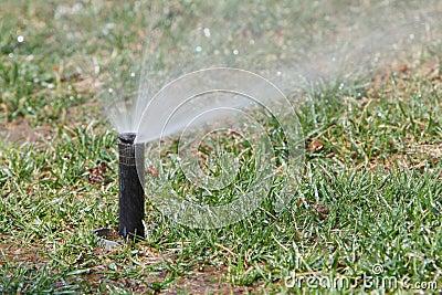 Watering lawn in spring