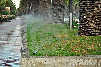 Watering of palm tree alley