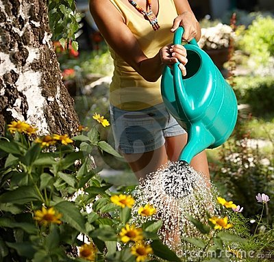 Watering plants at summertime