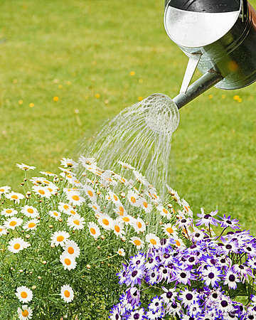 Watering Summer Flowers