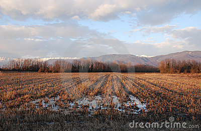 Waterloged Winter Field,Friuli