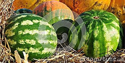 Watermelon on straw.