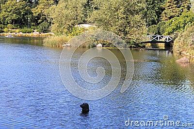 Waterpark in Kotka