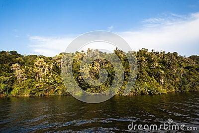 Waters Wetland Vegetation
