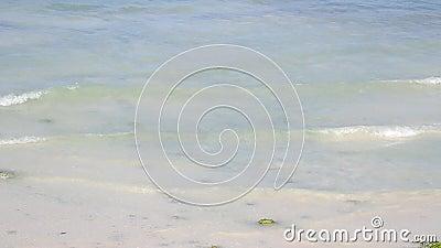 Waterstroom op de rand van het strand stock footage