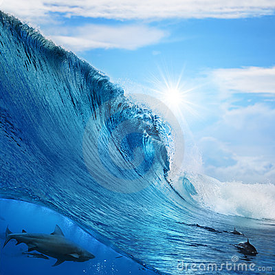 Wave breaks dolphins and shark