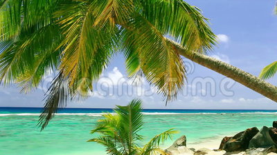 Waves on a tropical beach. With palm tree