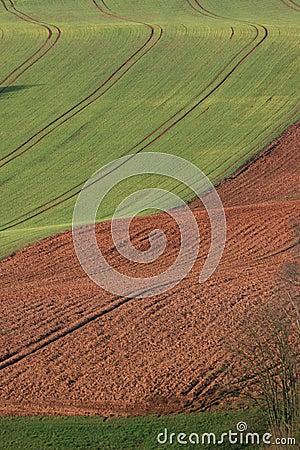 Wavy field