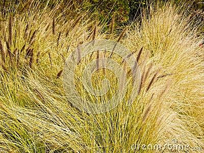 Wavy Grasses