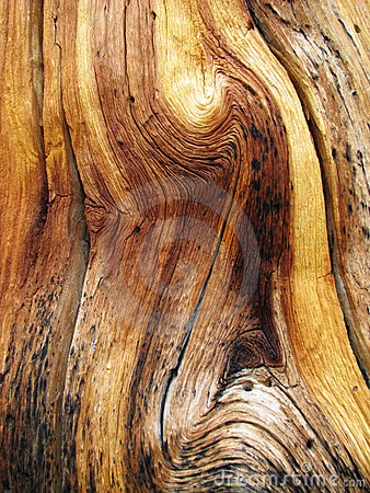 Free Wavy Wood Grain Stock Image - 3200741