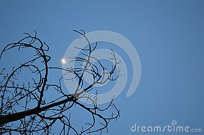Gibbous Moon Framed by Branches