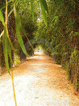 Way of bamboo 7