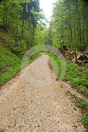 Way in the Black Forest