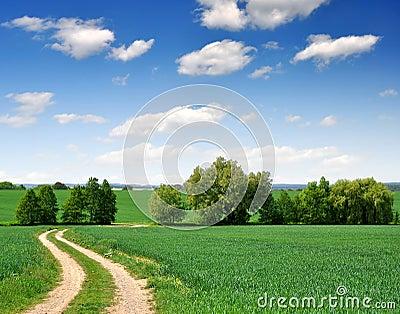 Way in field