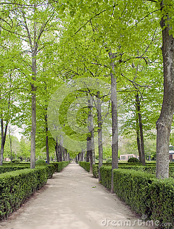 Way in the gardens of Aranjuez