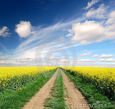 Way in rape field