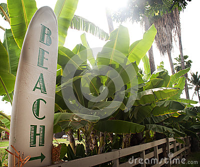 Way to Beach Sign on Surf Board with Palm Trees