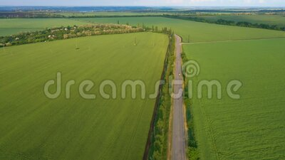 Wczesne letnie zielone pola i droga zbiory