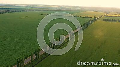 Wczesne letnie zielone pola i droga zbiory wideo