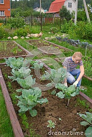 Free Weеding A Vegetable Garden Stock Photos - 5863523